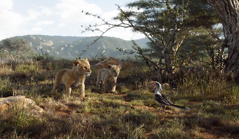 Photo du film Le roi Lion